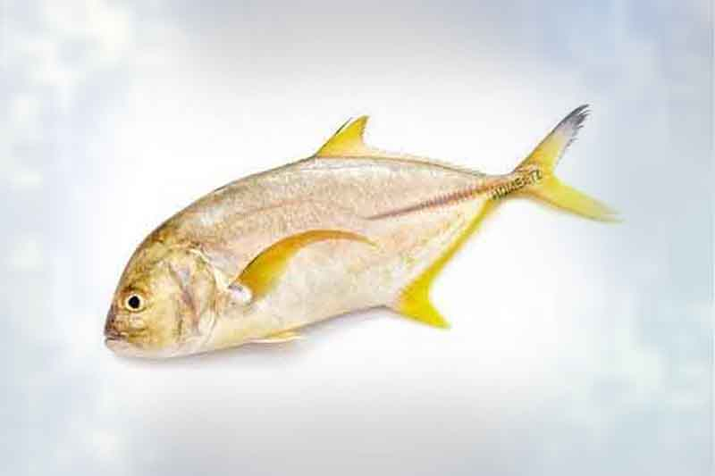 healthyfishonline products